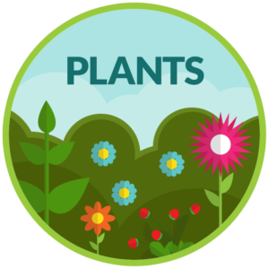 Springfest-Plants